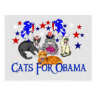 CATS FOR OBAMA POSTCARD