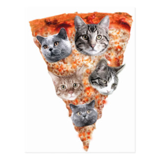 Cats For the Pizza-Lover Postcard