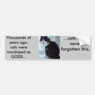 Cats have good memories bumper sticker