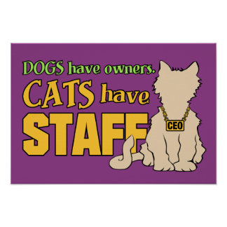 CATS HAVE STAFF custom poster