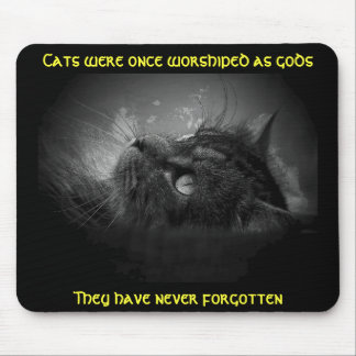 Cats haven't forgotten Meme Mouse Pad