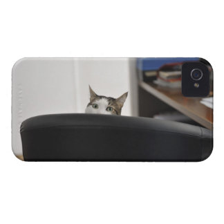 Cat's head showing of an office chair, nearby iPhone 4 Case-Mate cases