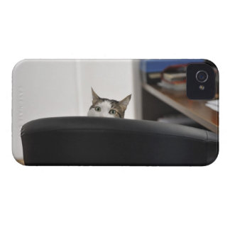 Cat's head showing of an office chair, nearby iPhone 4 cover