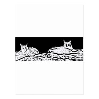 Cats in Black and White Postcard