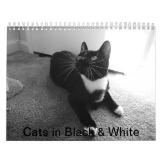 Cats in Black & White 2013 Calendar