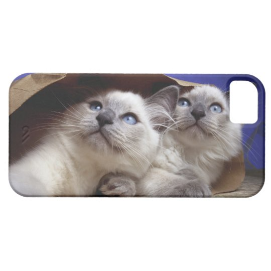 Cats in paper bag iPhone SE/5/5s case