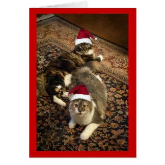 Cats in Santa Hats Christmas funny greeting card
