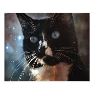 Cats in space flyer