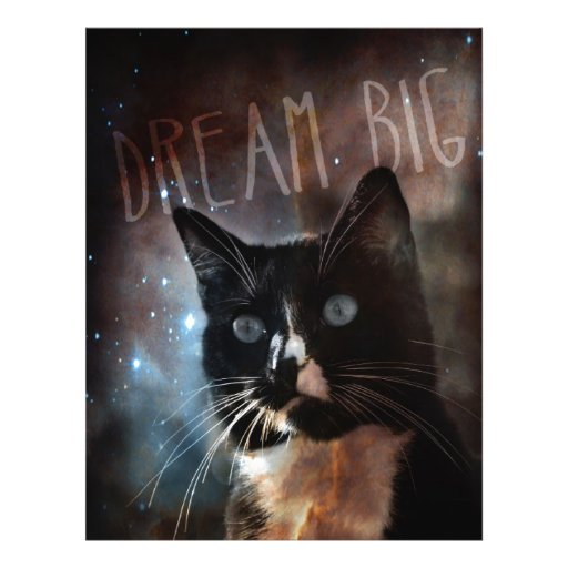 Cats in space flyer design