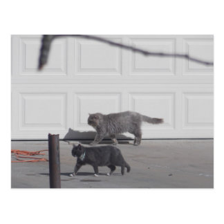 Cats in the neighborhood Card