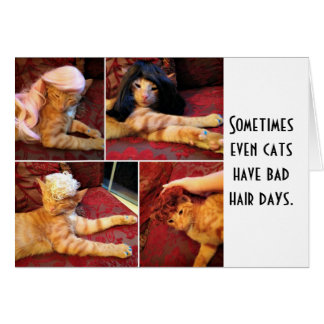 Cats in wigs (blank inside) greeting card