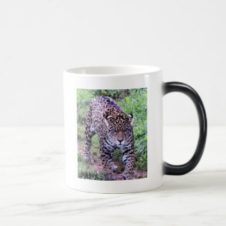 Cats Jaguar Safari Jungle Destiny Nature Peace Coffee Mugs
