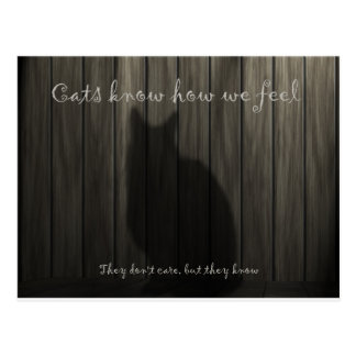 Cats Know How We Feel Postcard