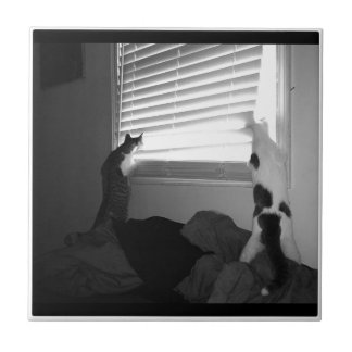 Cats looking out of the blinds - small square tile