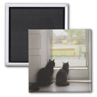 Cats looking out screen door 2 inch square magnet