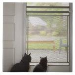 Cats looking out screen door ceramic tiles