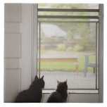 Cats looking out screen door large square tile