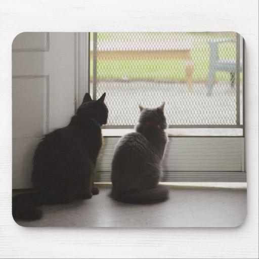 Cats looking out screen door mouse pads