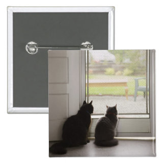 Cats looking out screen door pinback button