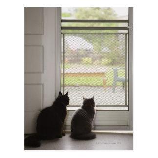 Cats looking out screen door postcard