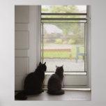 Cats looking out screen door poster