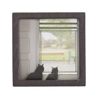 Cats looking out screen door premium gift box