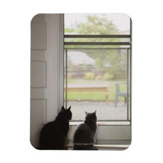 Cats looking out screen door rectangular photo magnet