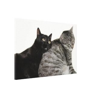 Cats love gallery wrap canvas