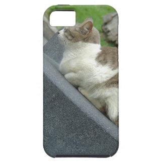 Cats Love Funda Para iPhone 5 Tough