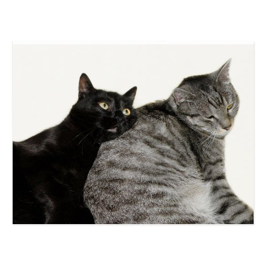 Cats love postcard