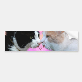 Cats lovers bumper stickers