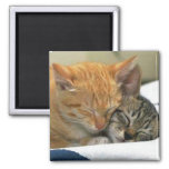 cats nappin magnets