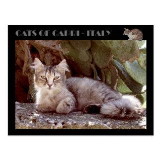 Cats of Capri - Italy Postcard
