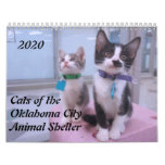 2020 Cats of the Oklahoma City Animal Shelter Calendar