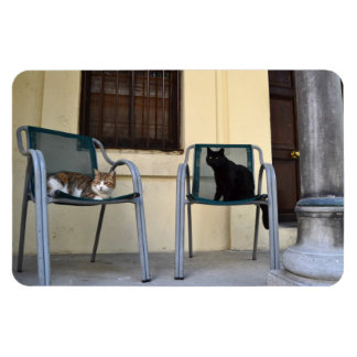 Cats on Chairs Magnet