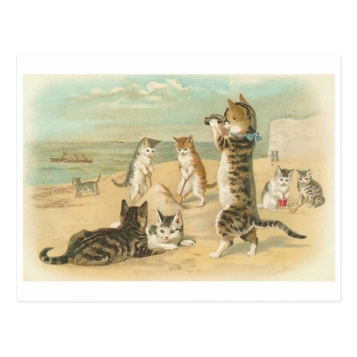 """Cats on the Beach "" Vintage Post Card"