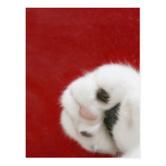 Cat's paw postcard