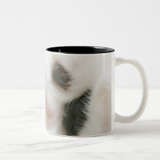 Cat's paw Two-Tone coffee mug
