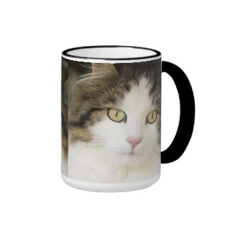 Cats photo cup
