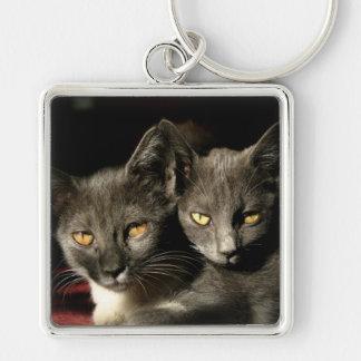 Cats Photo  Key Ring Keychain