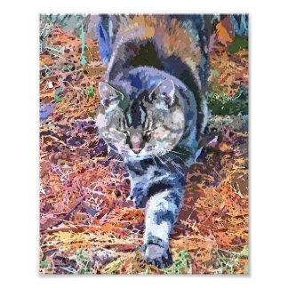 CATS PHOTO ART