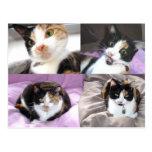 Cats Postcard