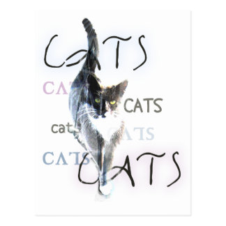 Cats Postcards