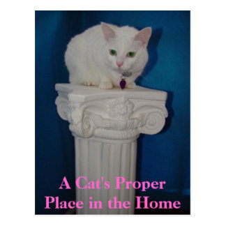 Cat's Proper Place in the Home Postcard