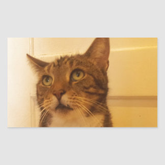 Cats Rectangular Sticker