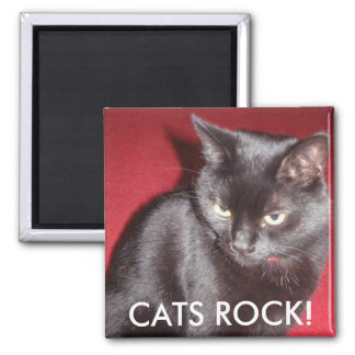 CATS ROCK! 2 INCH SQUARE MAGNET