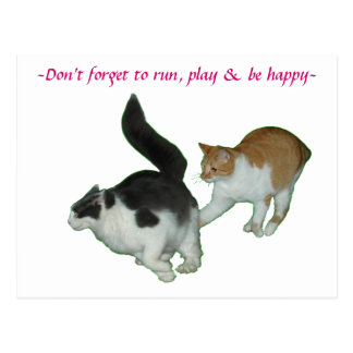 Cats run play happy Postcard