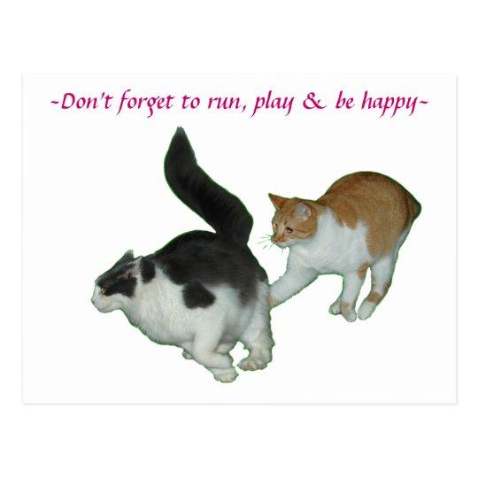 Cats run play happy Postcard
