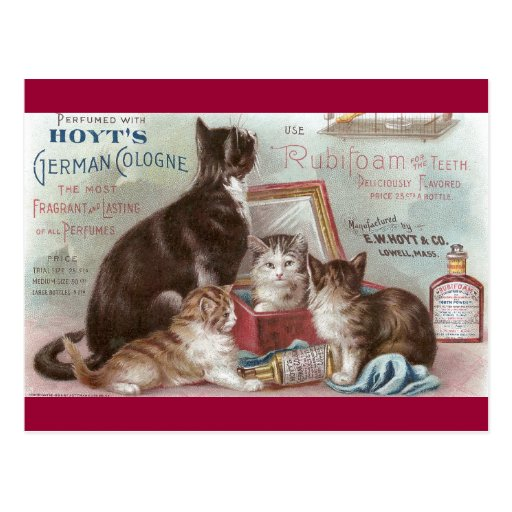 Cats Selling Cologne Victorian Trade Card Postcards