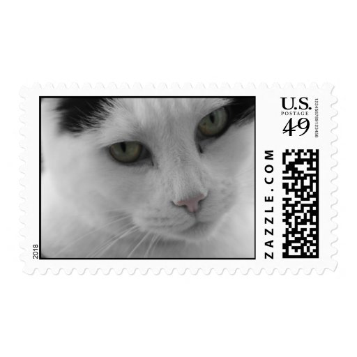 Cats Thoughts Postage